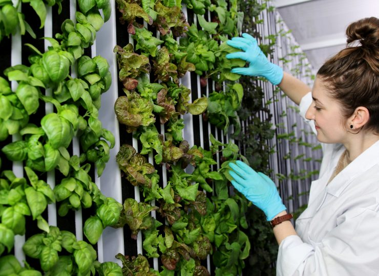 Freight-Farms-Hydroponic-Container-Farm-Interior-2